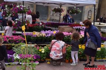 Fiori in Piazza Grande - Arezzo 16
