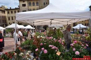 Fiori in Piazza Grande - Arezzo 19