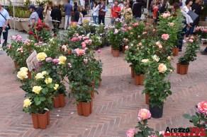 Fiori in Piazza Grande - Arezzo 22