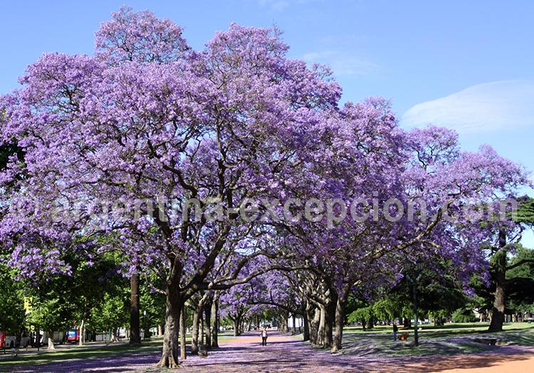 9 Buenos Aires Large Julio Monde Argentine Route Plus La Du La De