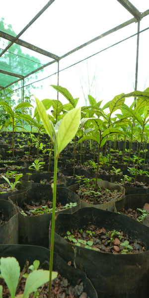 plantin13