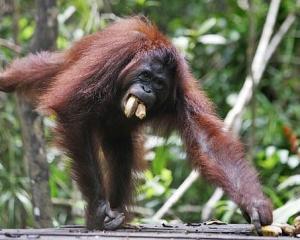 Indonesia: un plan para restaurar un millón de hectáreas de bosque