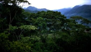 Bosques-en-la-Amazonia.-FOTO-ARCHIVO-INFOREGION-608x351