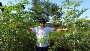 Plantaciones de Moringa Fidel