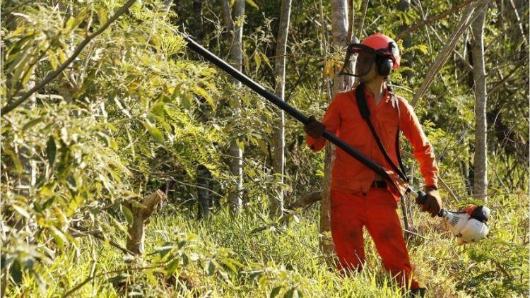La preservación de bosques nativos también involucra a las compañías