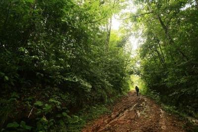<p>Imagen de una parte del bosque tropical en Costa Rica. EFE/Jeffrey Arguedas</p>