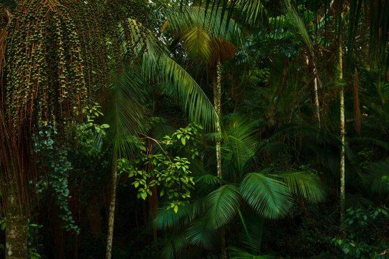 Foto Reserva Privada Yacutinga Lodge
