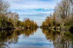 ParqueCiervodelo Pantanos6