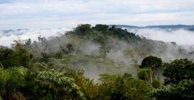 Foto Fabrian Franco SelvaMisiononera4(MOCONA en la ReservaYaboti)