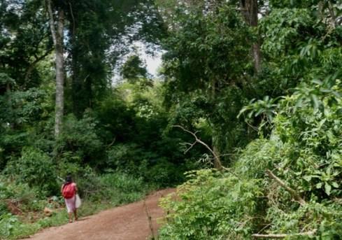 Deforestacionydesigualdad2