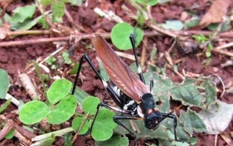 Insectos4
