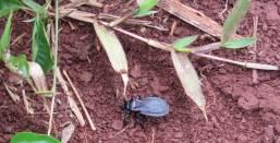 Insectos6