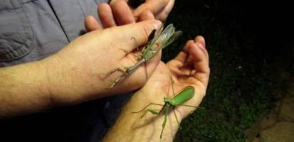 Insectos7