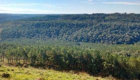 ForestacionesMisiones