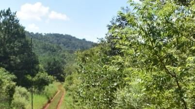 RuizdeMontoya(forestacionesybosquesnativos2)