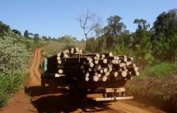 Camion Carga Forestal en caminos internos de Misiones