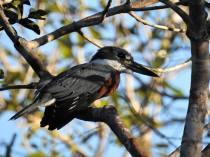 Pantanal4
