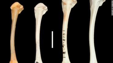 Registros Fosiles