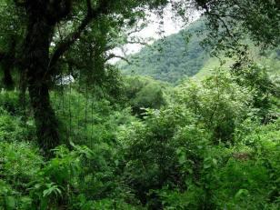 SelvaMisionera