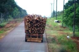 Transporte Carga Forestal Misiones 1