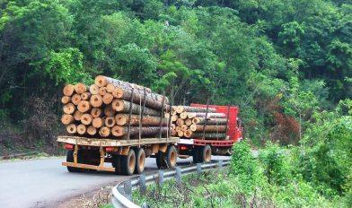 Transporte Carga Forestal Misiones