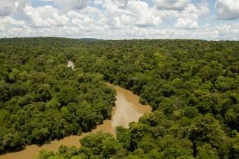 bosque_atlantico del alto parana (Foto Emilio White)