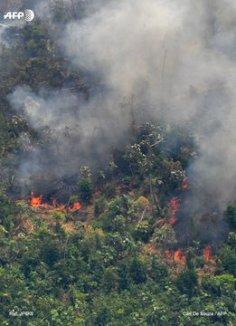 AFP Amazonas 4
