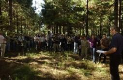 IngenieroForestal
