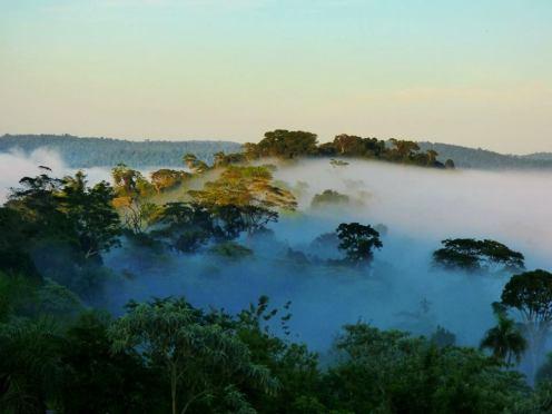 Selva-Misionera-1-2inga2icdi30