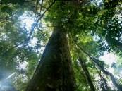 bosquesnaturales1
