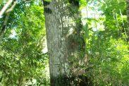RESERVA URUGUAI 164