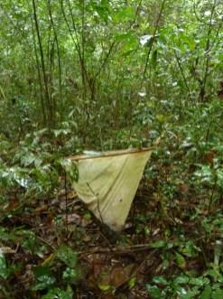 Recoleccion de Semillas Reserva San Jorge 1