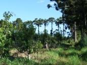 A Paisajes Forestales