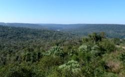 A Paisajes Forestales1