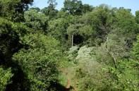 A Paisajes Forestales6 (RB Yaboti3)