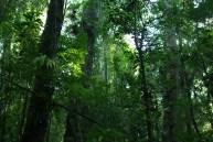 A Paisajes Forestales6