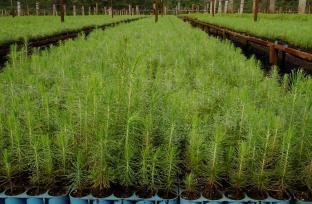 PlantacionesPM (Vivero)