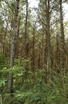 PlantacionesPM(1)