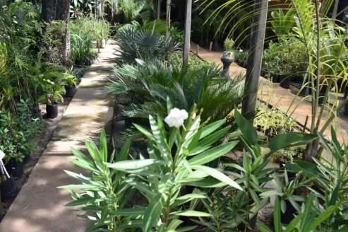 plantasverdes