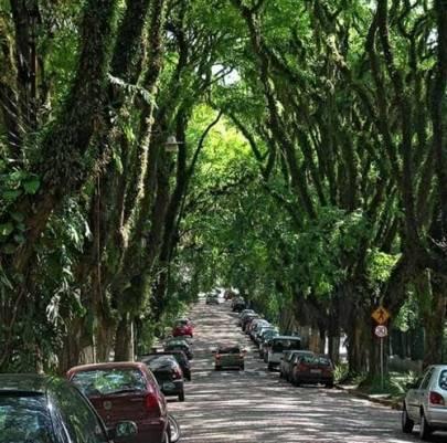 Arbolado Urbano Ciudades Brasil Porto Alegre