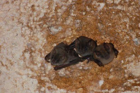 PN Caguanes Murcielagos