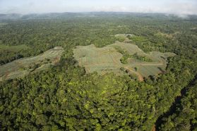 1 Deforestacion
