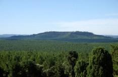 5 Foto Argentinaforestalcom (paisaje forestal)