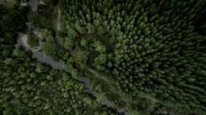 Chile Los Bosques de Chile 6