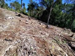 Comunidades de Kuña Piru (invasion de tierras) (15)