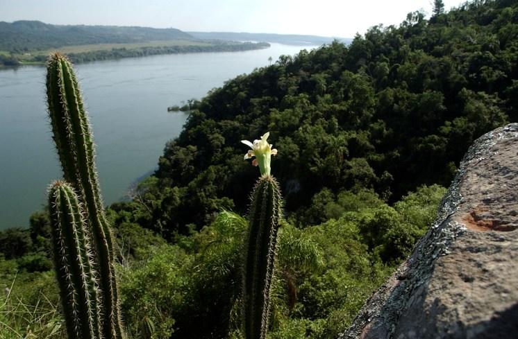 PPTeyuCuare (Foto ArgentinaForestal)4