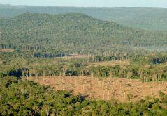 Bosques Nativos 2