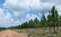 Corrientes (Evasa)