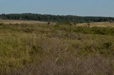 Plantaciones y Pastizales Sur Misionero