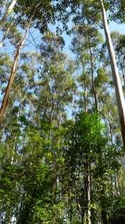 Bosques 2 (3)
